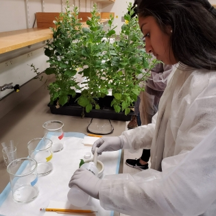 a student works with plants at a lab bench