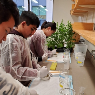 Students look at plants in the lab.